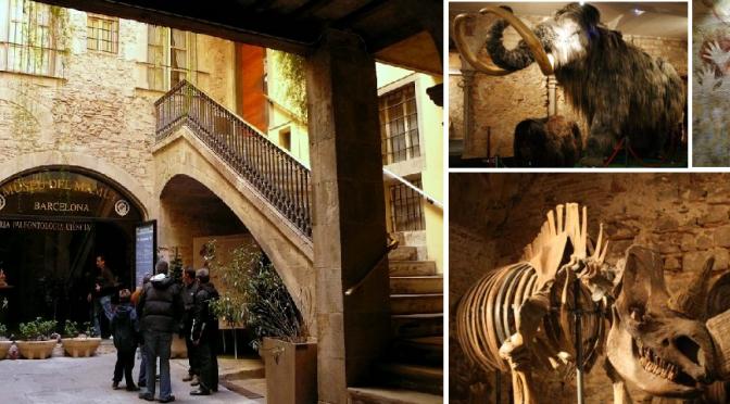 MUSEO DEL MAMUT